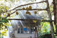 Durians-Garten mit Häuschen Stockfotos