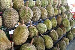 Durians King of Fruits Stock Photography