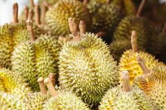 Durians at market Stock Images