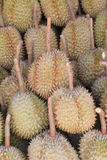 Durians in the market Stock Photos