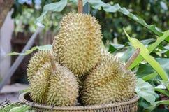 Durians op de mand Royalty-vrije Stock Foto's
