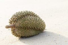 Durians på stranden Royaltyfri Fotografi