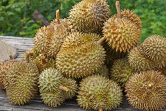 Durians. A pile of fresh durians royalty free stock photos