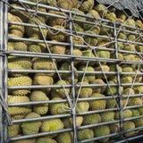 Durians in stock rack. Stock Photos