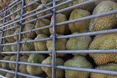 Durians während des Transportes Stockfotografie