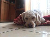 Durmiendo de Niko Imagen de archivo