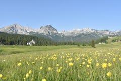 Durmitor halna panorama i lato kwiaty zdjęcie royalty free