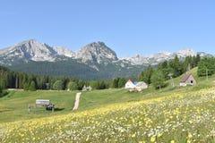 Durmitor halna panorama i lato kwiaty obraz stock