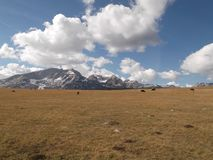 The Durmitor mountain. The Herd of cattle and The Durmitor mountain Royalty Free Stock Photo