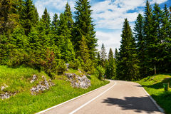 Durmitor National Park. Empty road in the forest of Durmitor National Park in Montenegro Royalty Free Stock Photography