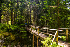 Durmitor National Park. Empty wooden bridge in the forest of Durmitor National Park in Montenegro Royalty Free Stock Photo