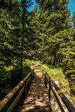 Durmitor National Park. Empty wooden bridge in the forest of Durmitor National Park in Montenegro Royalty Free Stock Images