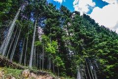 Durmitor-Park-Montenegro-Wald Lizenzfreies Stockfoto