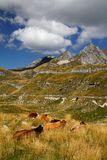 Durmitor Ring Stock Photos
