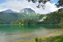 Durmitor teren, Montenegro, Czarny jezioro w lecie Obraz Stock