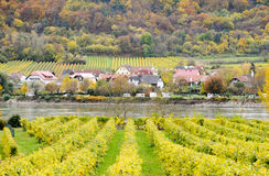 Beautiful wine growing in autumn around Durnstein town,Austria Stock Image