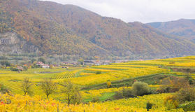 Beautiful wine growing in autumn around Durnstein town,Austria Royalty Free Stock Photography