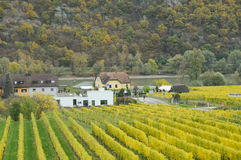 Beautiful wine growing in autumn around Durnstein town,Austria Stock Photos