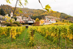 Beautiful wine growing in autumn around Durnstein town,Austria Royalty Free Stock Photo