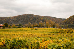 Beautiful wine growing in autumn around Durnstein town,Austria Stock Photography