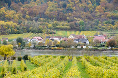 Beautiful wine growing on danube river bank in autumn around Durnstein town,Austria Royalty Free Stock Photography
