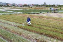 Duro lavoro vietnamita non identificato degli agricoltori nel campo della cipolla Fotografie Stock Libere da Diritti