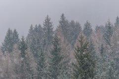Duro nevicando Fotografia Stock Libera da Diritti