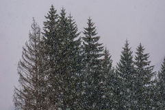 Duro nevicando Immagine Stock
