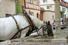 Durstige Wagenpferde am Steinbrunnen Stockfotos