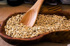 Durum wheat of ancient variety royalty free stock photo