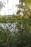 Durusuoever van het meer en bomen stock fotografie