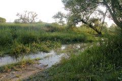 Durusuoever van het meer en bomen royalty-vrije stock foto's