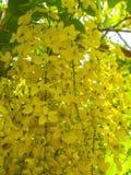 Duschblumen im Sommer stockfotos