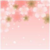 Dusche der Kirschblüten Stockfoto