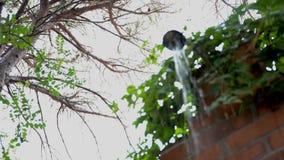 Dusche im Freien mit Blättern stock video
