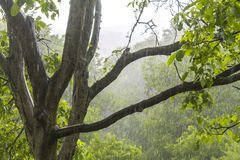 Duschregn i skogen Arkivbilder