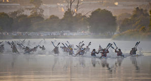 Dusi czółna maraton Południowa Afryka Zdjęcia Royalty Free