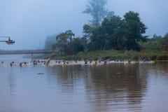 Dusi Canoe Race Start Paddlers  Stock Photography