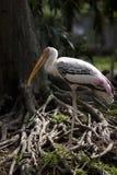 dusit flaminga zoo Zdjęcie Royalty Free