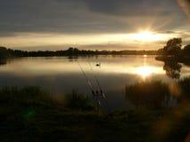 dusk κύκνος Στοκ φωτογραφίες με δικαίωμα ελεύθερης χρήσης