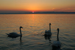 dusk πουλιών Στοκ φωτογραφίες με δικαίωμα ελεύθερης χρήσης