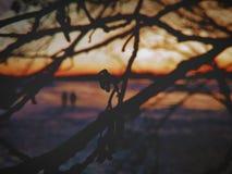 dusk fotografie stock libere da diritti