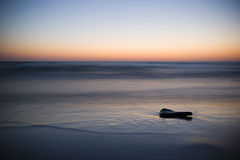 Dusk. Setting sun with driftwood Royalty Free Stock Images