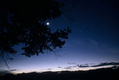 Dusk in Amazon basin. In Bolivia. Film grain visible Royalty Free Stock Image