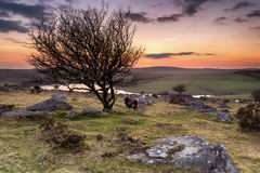 Dusk on Bodmin Moor. Night falls over Bodmin Moor in Cornwall, from Tregarrick Tor overlooking Siblyback Lake royalty free stock photography