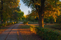 Dusk in the colorful park on sunny autumn day Stock Photos