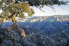 Dusk in the Copper Canyon Stock Photography