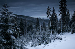 Dusk in forest at winter Royalty Free Stock Photos