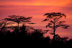 Dusk at Kinabatangan river. Jungle near Kinbatngan river in the evening, Sabah, Borneo, Malaysia Stock Photos