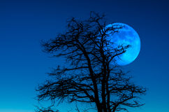 Dusk Moon Royalty Free Stock Photo